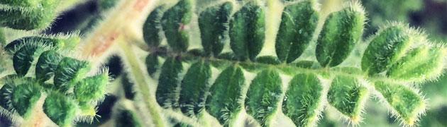 simetría de la hoja de palmera