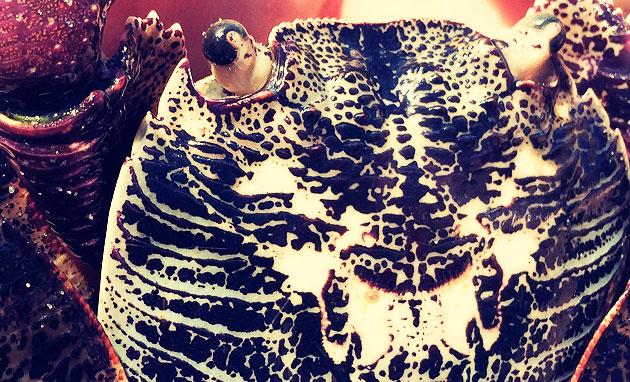 3-cangrejo-australiano-diseno-mar